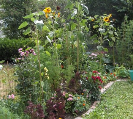 Garten im Sommer.jpg
